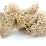 Wasp Earrings