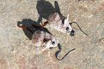 Brown Mice Fly Fishing Earrings